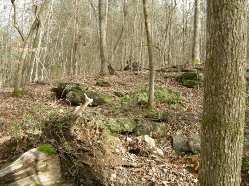 Beautiful Timberland : Forsyth : Monroe County : Georgia