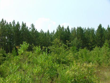 10 Acre Lot : Vidalia : Toombs County : Georgia