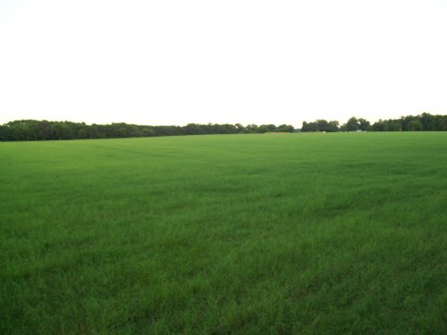 206 Acres For Sale : Marion : South Carolina