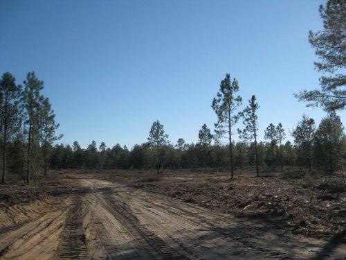 Pearl Bonnet 12 Tract : Windsor : Aiken County : South Carolina