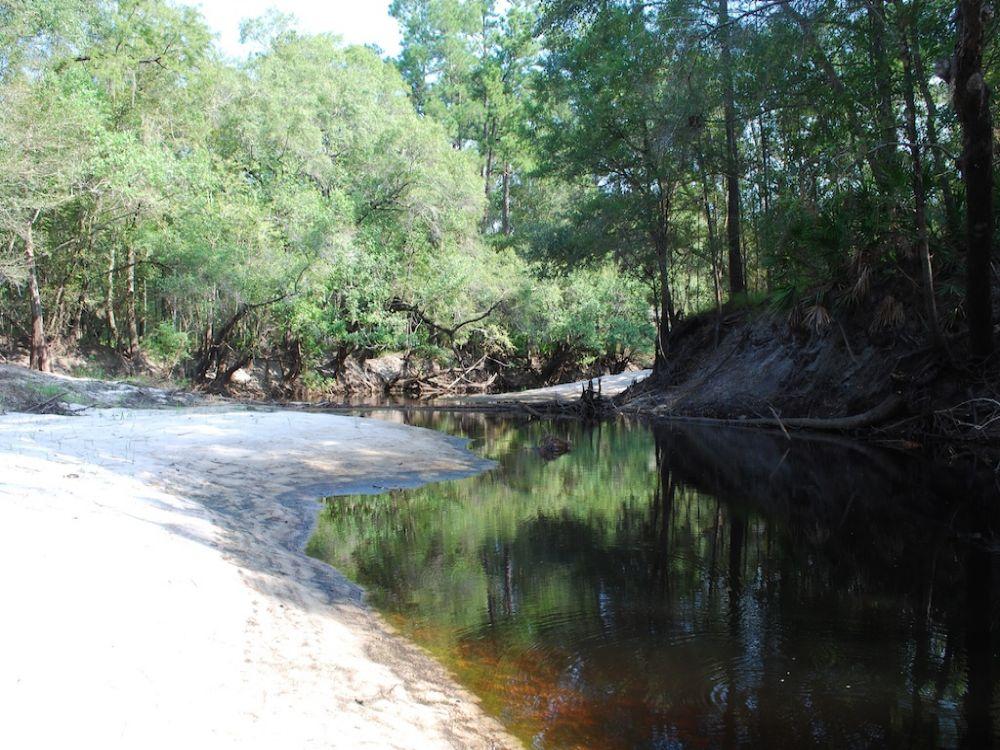 Owl Lane Tract - Satilla River 239 : Waycross : Ware County : Georgia