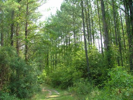 10 Acre Lot : Vidalia : Toombs County : Georgia