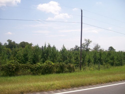 5.5 +/- Ac Of Planted Pines : Spring Hill : Pike County : Alabama