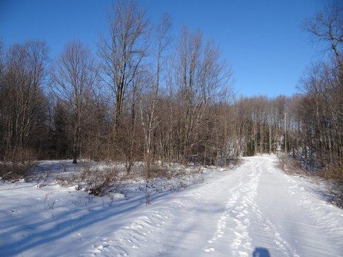 5 Acres Near State Forest Hunting : Smyrna : Chenango County : New York
