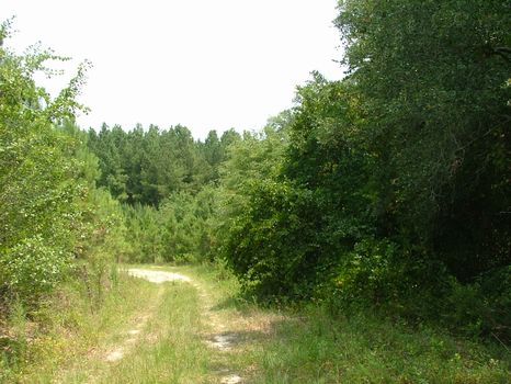 11.65 Acre Lot : Vidalia : Toombs County : Georgia