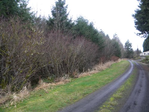30 Acre Homesite : Pe Ell : Lewis County : Washington
