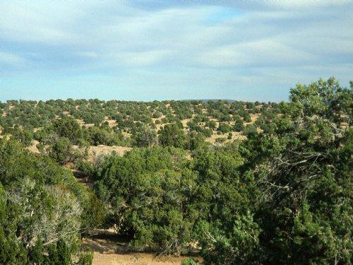 Chevelon Canyon Ranch Arizona : Heber : Navajo County : Arizona