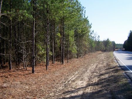 Hunting Land - 61 Ac. Allendale Cty : Allendale : South Carolina