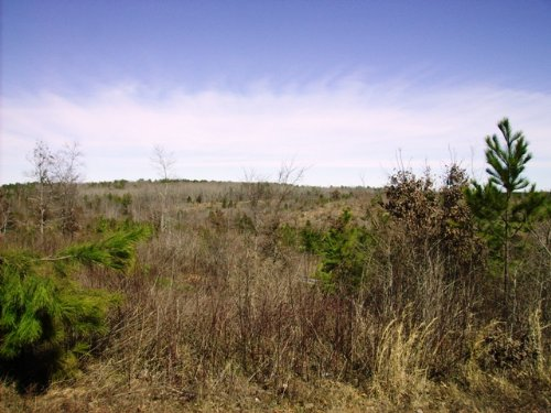 162 Acres With Ranch Potential : Hot Springs : Saline County : Arkansas