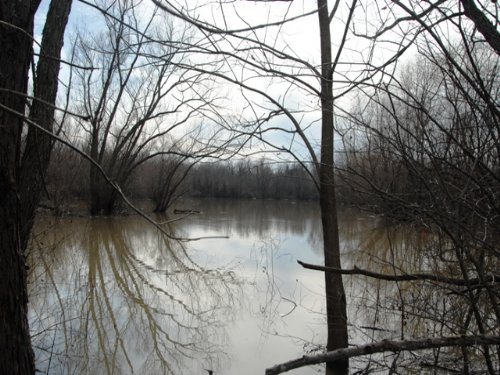 Duck And Deer Hunting Land For Sale : Colt : St. Francis County : Arkansas