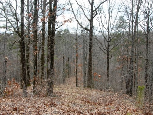Great Hunting Timberland : Wynne : Cross County : Arkansas
