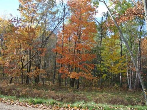 Fantastic Forested 5.32 Ac Parcel : Minocqua : Oneida County : Wisconsin