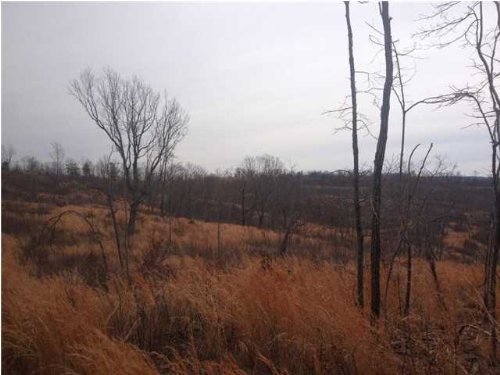 110 +/- Acres Jackson Point Road : Sewanee : Marion County : Tennessee