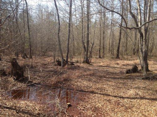 45.7 Acres : Sumter : South Carolina