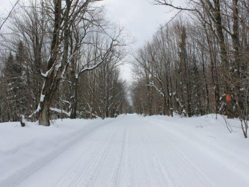 51 Acres Remote Recreational Land : Montague : Lewis County : New York