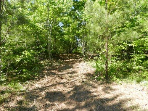 3.7+/- Acres Building Site : Sylacauga : Talladega County : Alabama