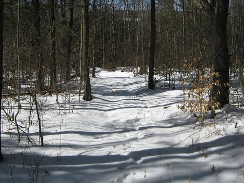 5 Acres Borders State Forest : Orange : Schuyler County : New York