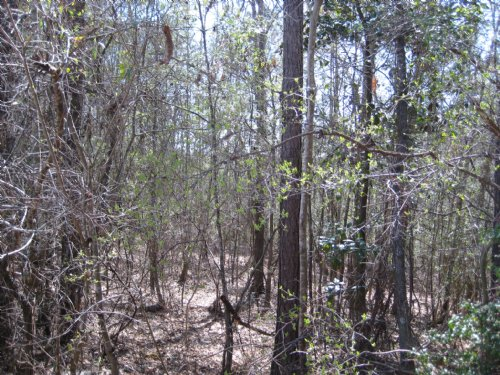 39 Acres : Quitman : Clarke County : Mississippi