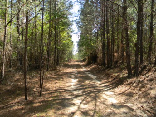 Perote Paradise : Perote : Bullock County : Alabama