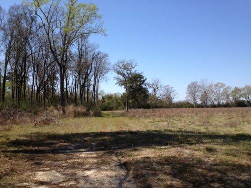 24+/- Acres Homer Bunch : Statesboro : Bulloch County : Georgia