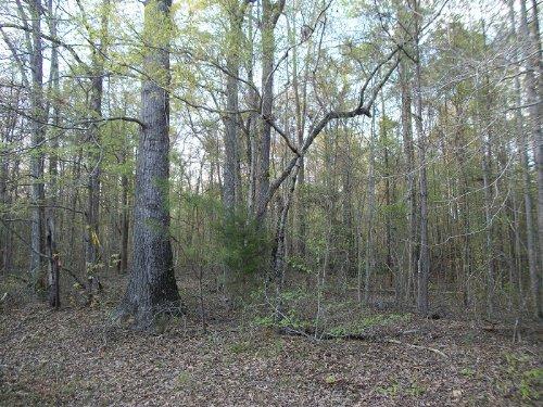 4 Acres Outside City Limits : Roanoke : Randolph County : Alabama