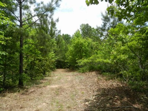8.8+/- Acres National Forest : Sylacauga : Talladega County : Alabama