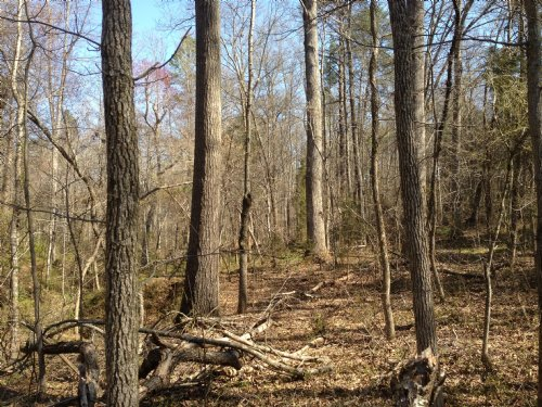 9.82 Acre Unrestricted Tract : Chesnee : Cherokee County : South Carolina