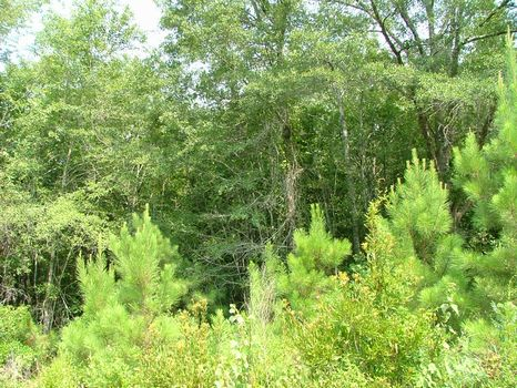 14.18 Acre Lot : Vidalia : Toombs County : Georgia