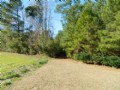 Bug Hill Tract : Bug Hill : Columbus County : North Carolina