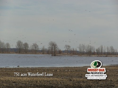751 Acre Duck Hunting Lease : Aubrey : Lee County : Arkansas