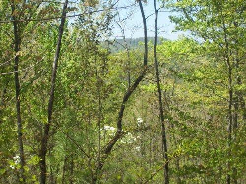 Residential Land : Ellijay : Gilmer County : Georgia