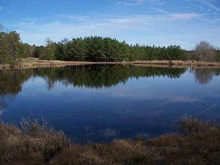 491 Acres - Beautiful Creek : Dawson : Randolph County : Georgia