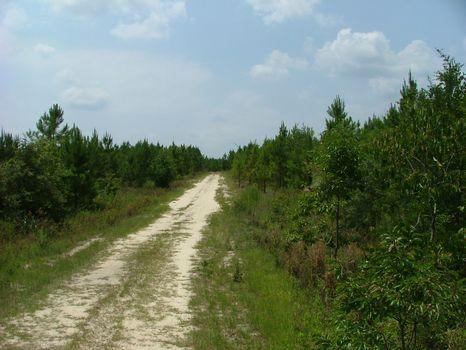 11.77 Acre Lot : Vidalia : Toombs County : Georgia