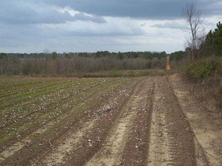 71 Ac, Field, Pine, Creek, Cutover : Albany : Mitchell County : Georgia