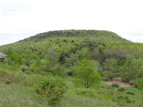 180 Acres Hunting Near Cooperstown : Maryland : Otsego County : New York