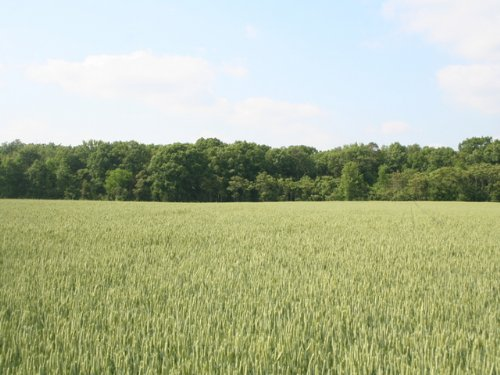 2 Acres Private Land In Ruther Glen : Ruther Glen : Caroline County : Virginia