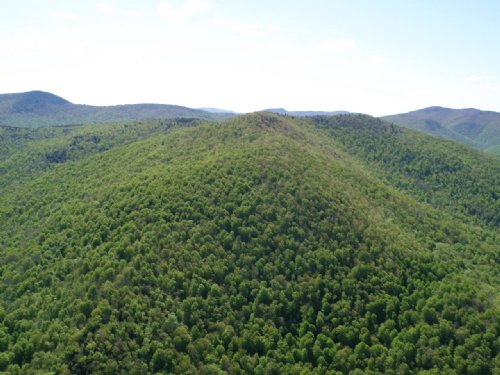 Tweed River Forest : Stockbridge : Windsor County : Vermont