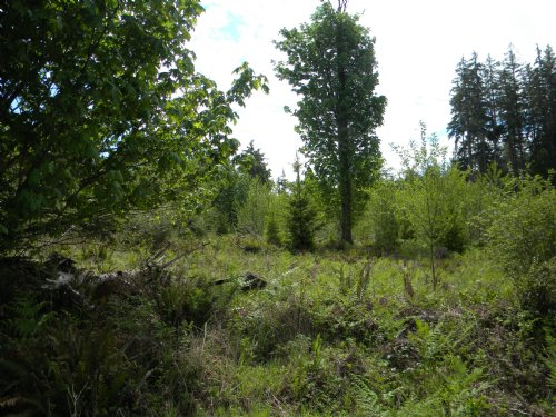 Good Usable 5 Acres : Shelton : Mason County : Washington