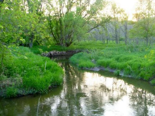 100 Acres Kittleson Valley Creek : Mount Horeb : Iowa County : Wisconsin