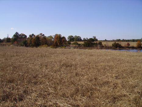 4.65 Acres   Bark Creek Plantation : Waynesboro : Burke County : Georgia