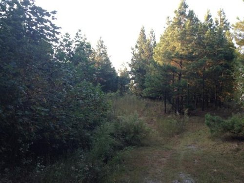 8.9+/- Acres Foreclosed Property : South Pittsburg : Marion County : Tennessee
