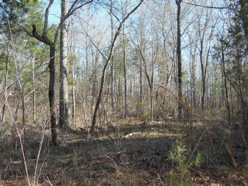 Indian Creek Tract : Furman : Wilcox County : Alabama