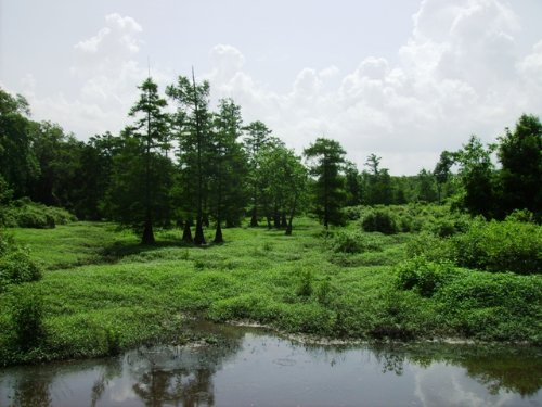 140 +/- Acre Duck And Deer Hunting : Perry : Arkansas