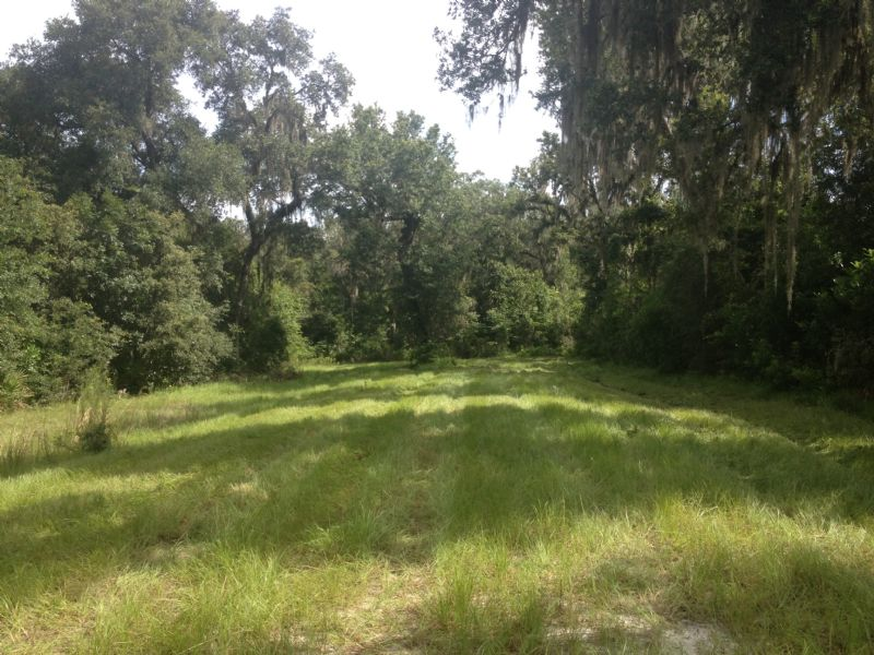 Owner Financing 10 Acres Mol Land For Sale Brooksville
