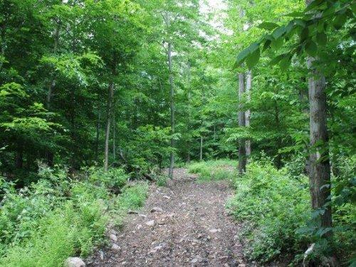 162 Acres Woods Building Site : Parish : Oswego County : New York