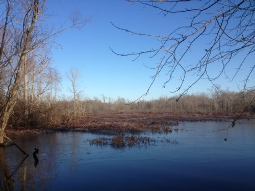 1153 Acres Of Duck And Deer Land : Benton : Saline County : Arkansas
