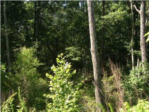 4.38+/- Acres Brow Lot With Creek : South Pittsburg : Marion County : Tennessee