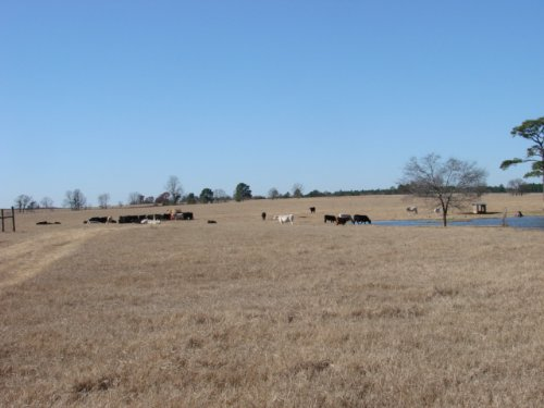 Oakland Ranch Cattle Farm : Buena Vista : Marion County : Georgia