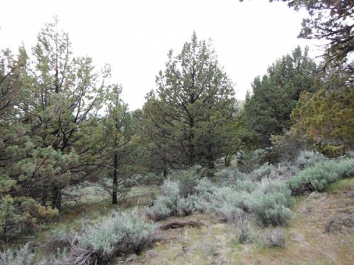 20 Acres Moon Valley Ranch. Terms : Termo : Lassen County : California