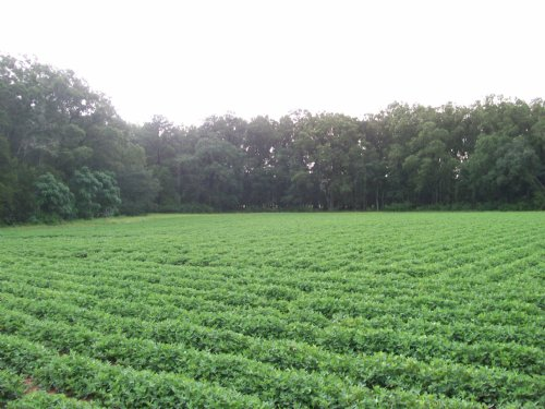 Farm In Highly Desired Location : Sasser : Terrell County : Georgia